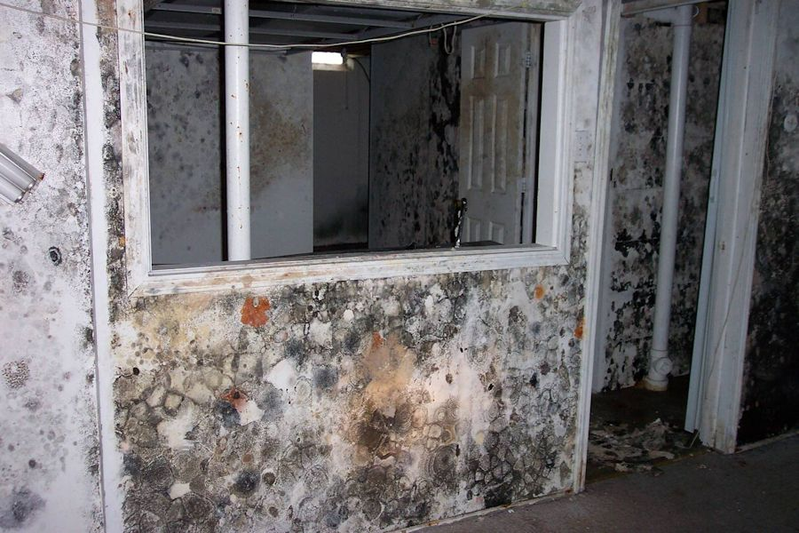 How Detect Household Mold