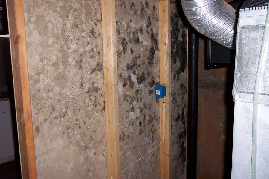 How To Detect Household Mold Home Sample 1